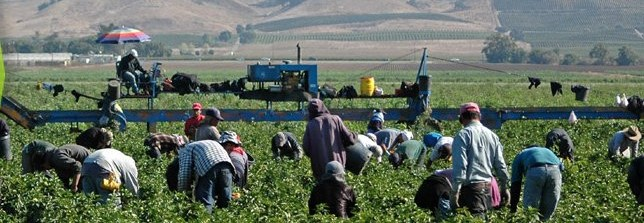 Photo: Farm Workers in the Fraser Valley