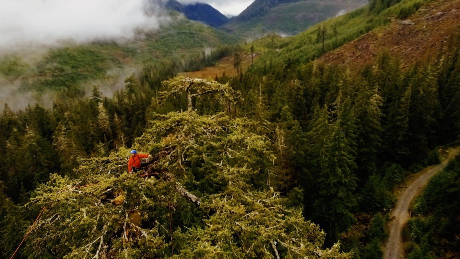 #WorthFightingFor: environmental short films Hunting Giants and Water Warriors